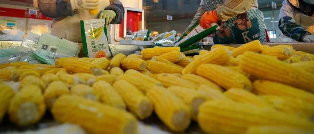 玉米收购价格12月份回调可能性大,饲料粮供应有保障
