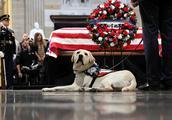 """老布什追悼仪式在美国会举行 其""""忠犬""""最后一次告别主人"""